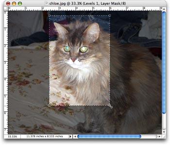 How to fix animal white eye part 2 photolesa how to fix animal white eye part 2 sciox Image collections