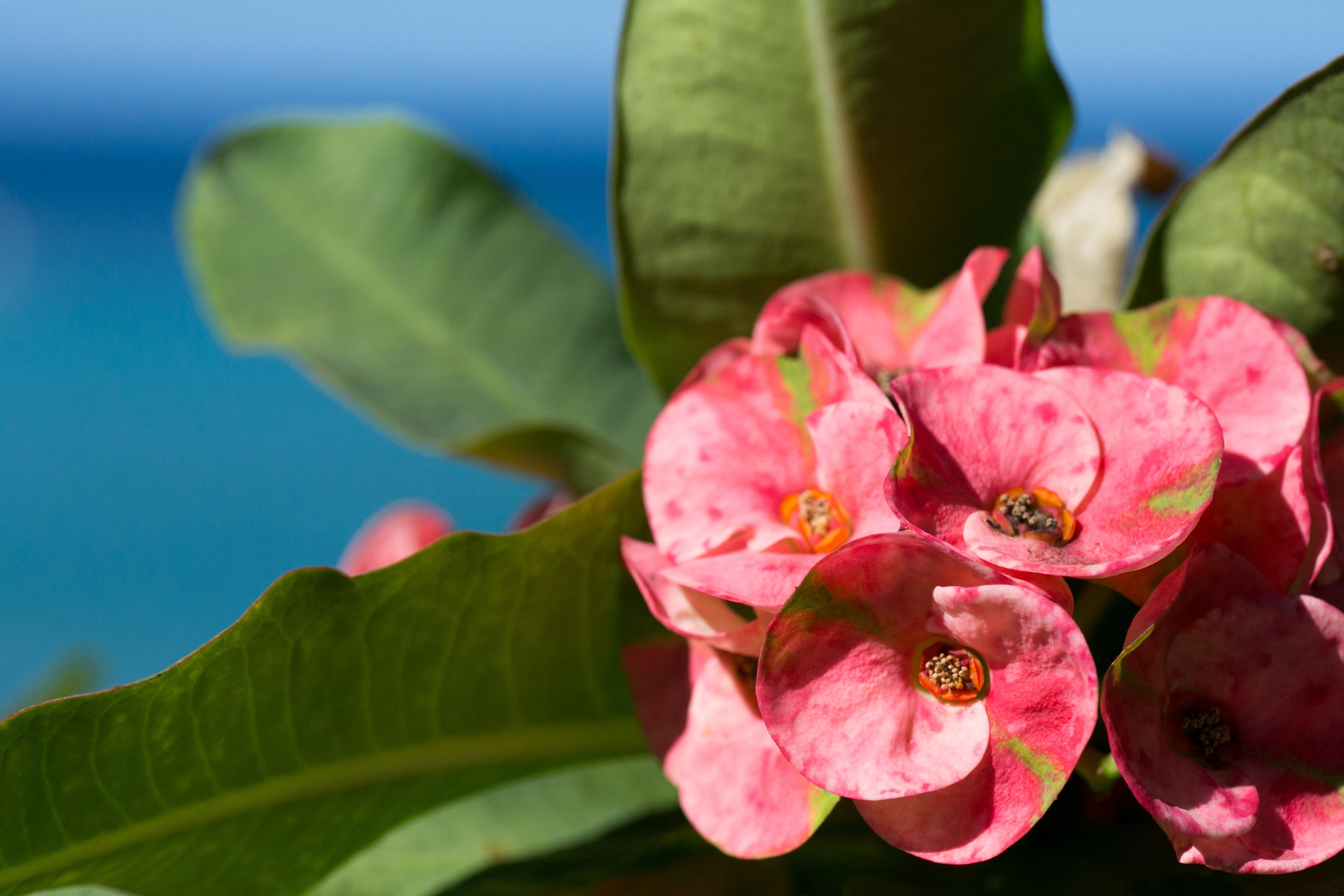 Hawaiian flowers photolesa hawaiian flowers izmirmasajfo Image collections